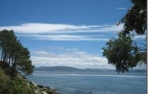 Los eucaliptos afectan a la vida fluvial