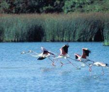 Doñana podría acabar como Las Tablas de Daimiel
