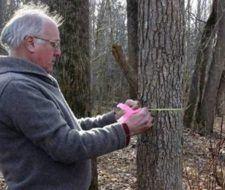 Los árboles crecen más rápido debido al calentamiento global