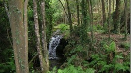 21 de Marzo: Día Mundial Forestal