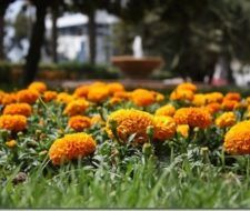 Parques Alicante
