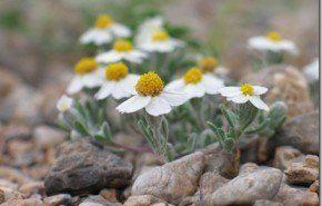 Calentamiento Global: efectos en plantas del desierto