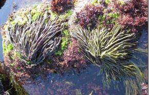 Degradación del agua