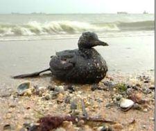 Derrame de petróleo: consecuencias