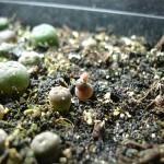 semillero1