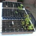 semilleros2
