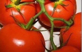 Cultiva tomates de forma fácil