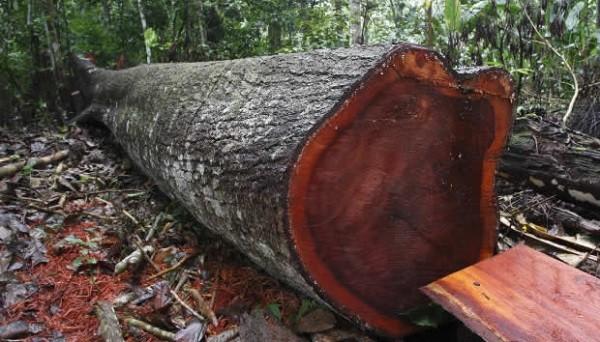 191 Qu 233 Es La Tala Ilegal De Bosques Elblogverde Com
