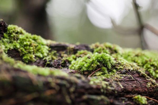 Importancia biodiversidad