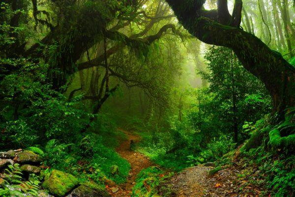 Importancia de la biodiversidad del suelo