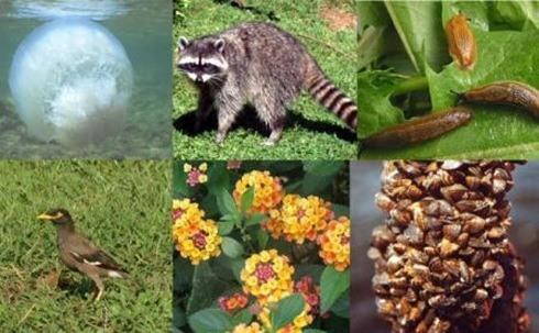 biodiversidad 4