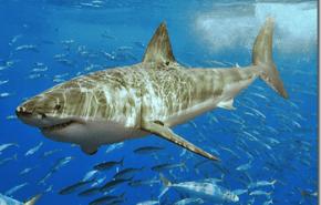 Catalogo de Especies Amenazadas en España   Actualizacion 2011