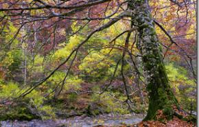 Bosques España| El 2010 mostro una mejora en la salud de los arboles