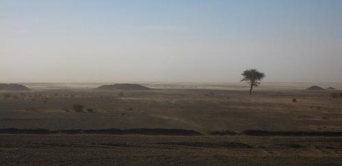 Talha del Sáhara