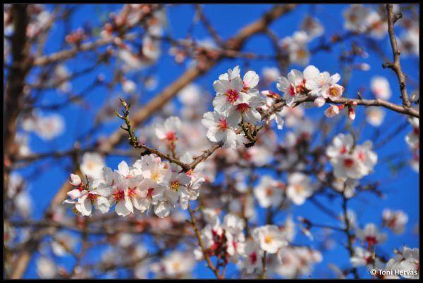 por-que-empieza-la-primavera