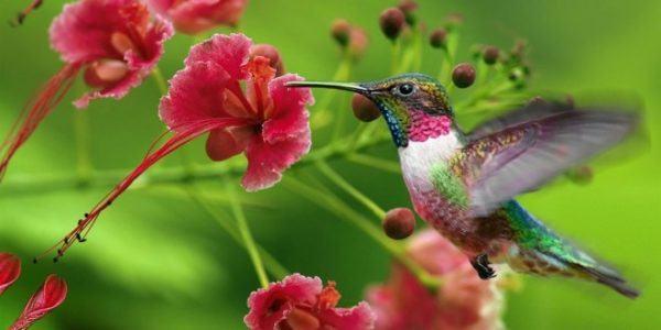 senales-de-que-empieza-la-primavera-colibri