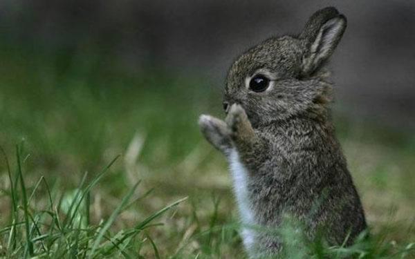 senales-de-que-empieza-la-primavera-conejo