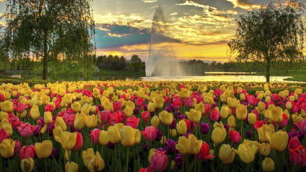 senales-de-que-empieza-la-primavera-fuente