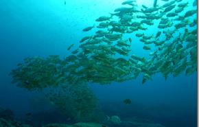 Islas Canarias: la proteccion a las areas marinas necesita ser ampliada