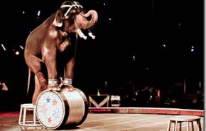 Maltrato animal: el Reino Unido prohibira los animales en los circos