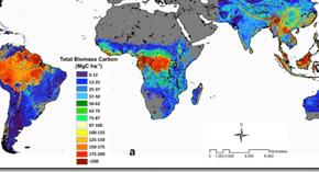 Bosques tropicales y carbono en biomasa | Mapas
