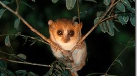 Madagascar | 600 nuevas especies, miles en peligro de extincion