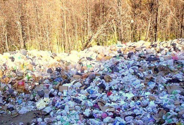 contaminación de bosques