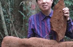 El hongo mas grande del mundo pesa media tonelada