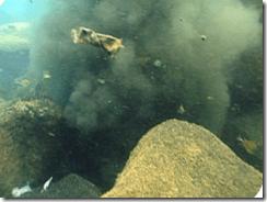 Contaminacion | Bandera Negras en Canarias