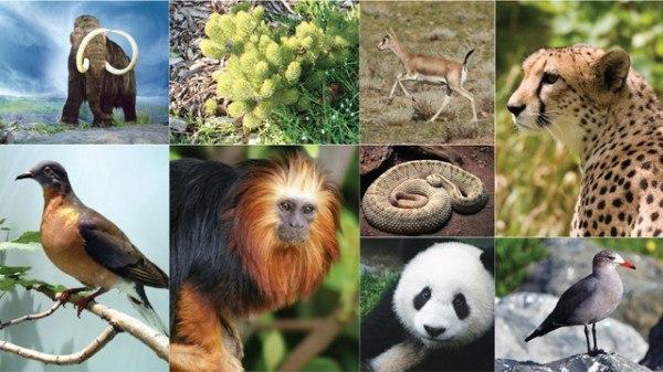 clasificacion-de-la-biodiversidad-en-el-mundo