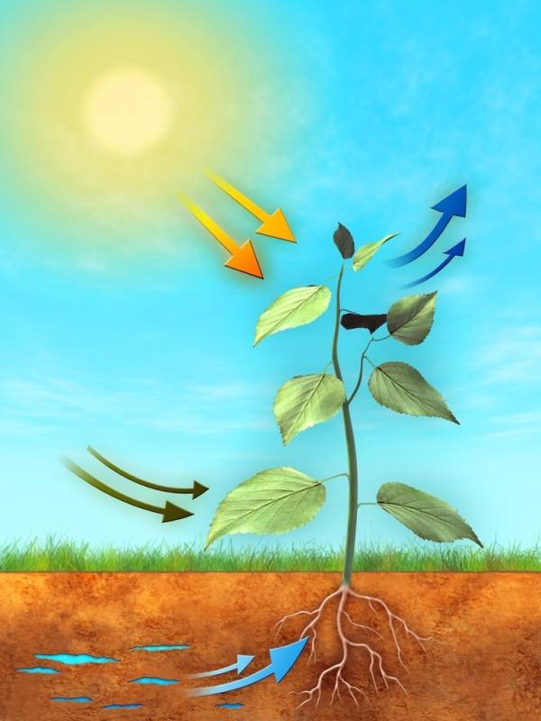 elementos-que-intervienen-en-la-fotosintesis