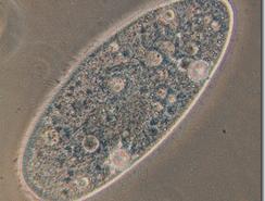 Celulas: la vida en su forma mas pequeña