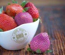 Alimentos transgénicos: qué son, cómo localizarlos y peligros