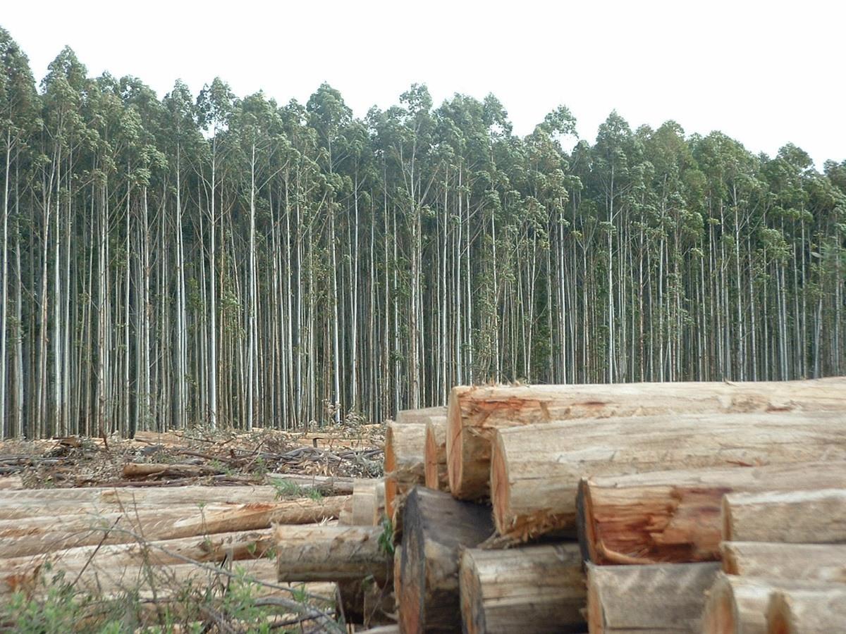 El proceso del papel o de c mo un rbol se vuelve papel for Partes de un vivero forestal