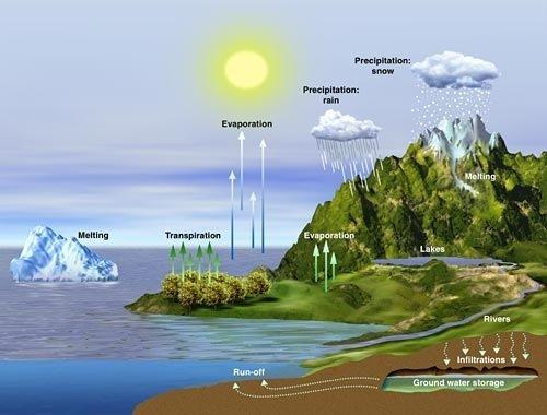 la-interacción-entre-los factores-bióticos-y-abióticos