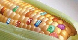 Alimentos Transgénicos: qué son y por qué son peligrosos