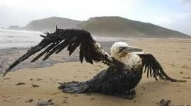 Catástrofes naturales y crímenes ecológicos 2013