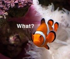 Los 6 impactos negativos que causa el cambio climático en los animales