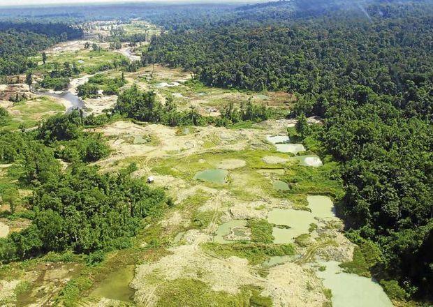 contaminacion bosques