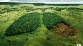 La contaminación de los bosques continúa ¿Hasta cuándo?