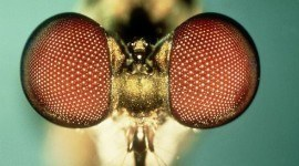 Una mirada a la naturaleza: los fascinantes ojos de los insectos