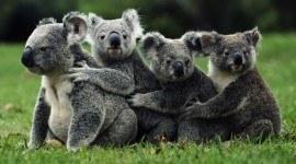 Especies en peligro de extinción en 2013