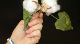 C&A produce ropa con algodón orgánico