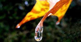 22 de Marzo de 2017: Día Mundial del Agua