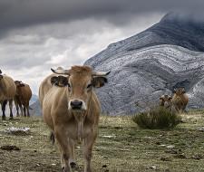 La naturaleza también contamina: Flatulencia