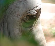 Reunión del CITES para proteger especies en peligro de extinción