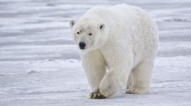 El Polo Norte es el más afectado por el calentamiento global y podría quedarse sin hielo
