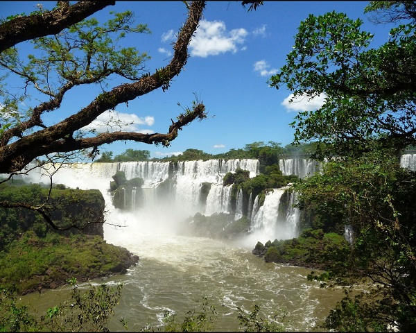 La Selva Misionera o Paranaense - ElBlogVerde.com