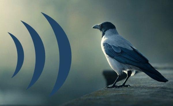 Efecto del ruido en las aves