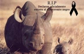 El rinoceronte negro se ha extinguido ¿Cuándo pararemos?